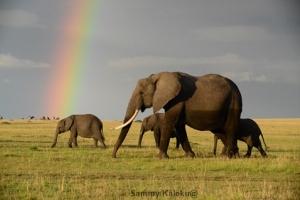 Affordable, unique, accommodation, Maasai, Mara, Kenya, Kaleku, bush, house,