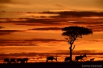 Kaleku, Sammy, Accommodation, Masai, Mara, Kenya, Affordable,