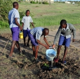 Planting trees in schools
