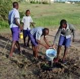 Planting trees in schools